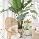Déco nude avec plantes